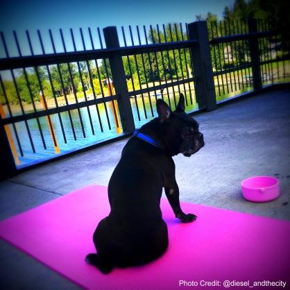 yoga-diesel